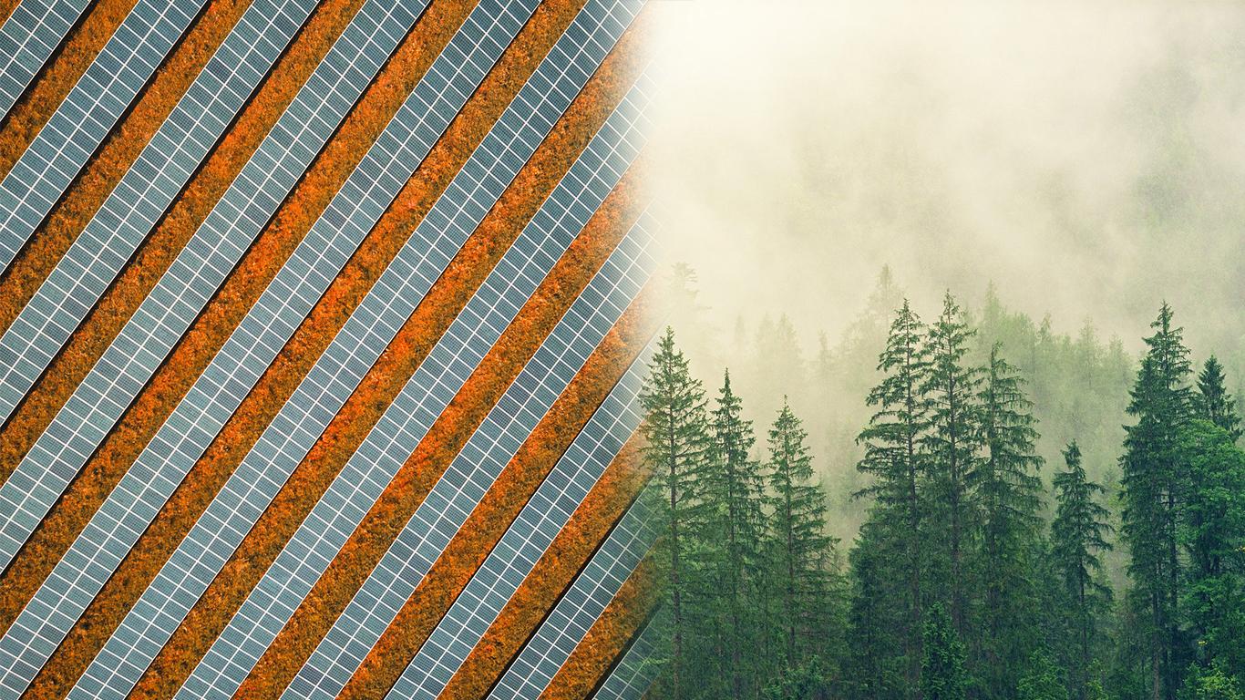 La complémentarité des EAC et de la compensation carbone